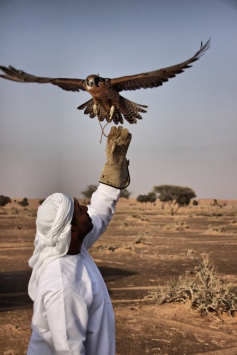 Falconry_Day